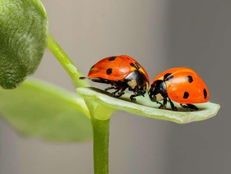 Joko sinulla on hyönteishotelli pihallasi?